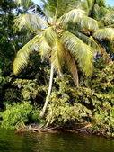 Exotic vegetation — Stock Photo