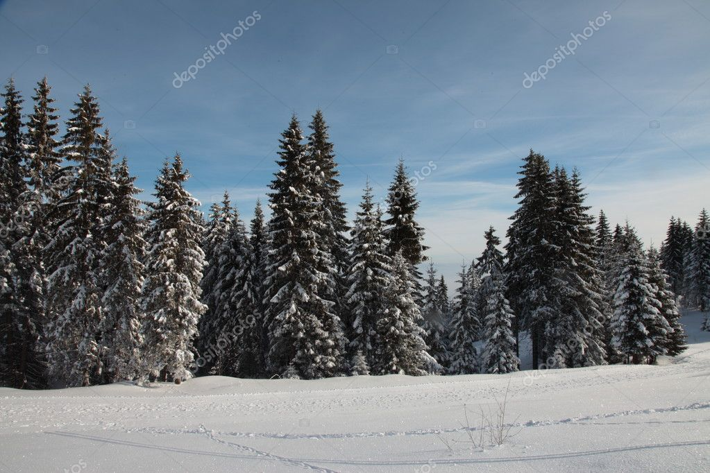 Winter forest  Stock Photo #9239172