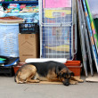 Dog near shops — Stock Photo #9884878