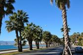 Promenade with palm trees in Malaga — Stock Photo