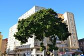 A tree in back of building in malaga — Stock Photo