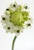 Flower on White — Stock Photo