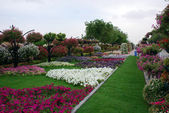 Hanging gardens of Al Ain — Stock Photo