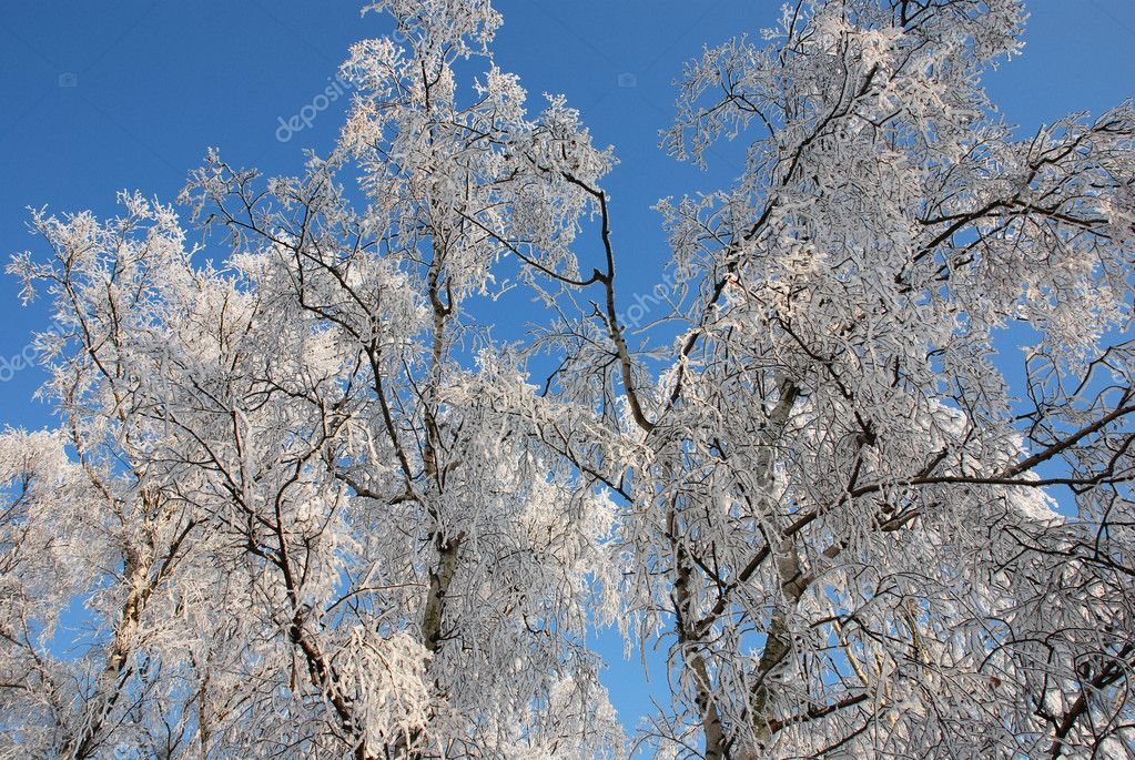 Nature in winter with snow, ice and a clear blue sky — Stock Photo #8465321
