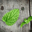 Fresh green spearmint - Stock Photo