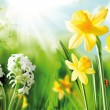 Cheerful Spring Bulbs - Stock Photo