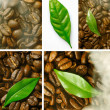 Coffee Bean And Leaf Collage — Stock Photo