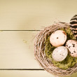 Speckled Eggs And Feather In Nest — Stock Photo