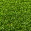 Grass field texture — Stock Photo