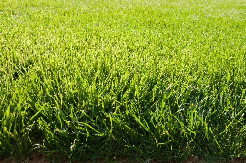 Texture de terrain herbe photo 8760952 for Haute herbe pokemon