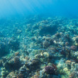 Coral Reef — Stock Photo #10045591