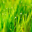 Grass and Morning Rain Drops — Stock Photo #10557917