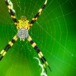 Black and Yellow Garden Spider - Stok fotoğraf
