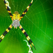 Black and Yellow Garden Spider - Stockfoto