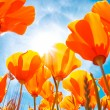 Stock Photo: vibrant colorful flowers
