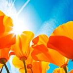 żywe kwiaty kolorowe — Zdjęcie stockowe