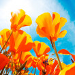 Vibrant Colorful Flowers — Stock Photo #8473085
