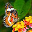 Butterfly on Colorful Flower — Stock Photo