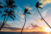 Sunset Palm Trees in Hawaii — Stock Photo