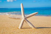 Star Fish on the Beach — Stock Photo