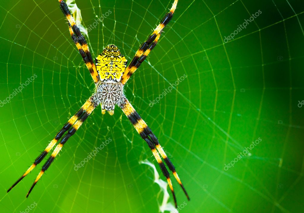 Black And Yellow Garden Spider Stock Photo Epicstockmedia 8472527
