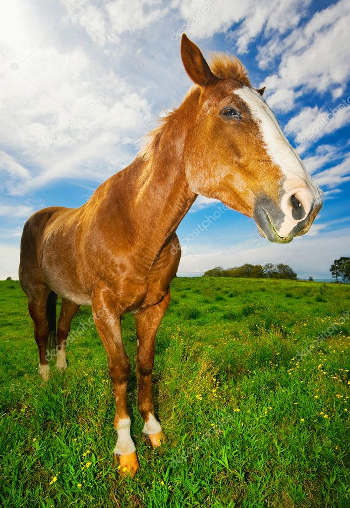 Horse in Green Field  Stock Photo #8473189