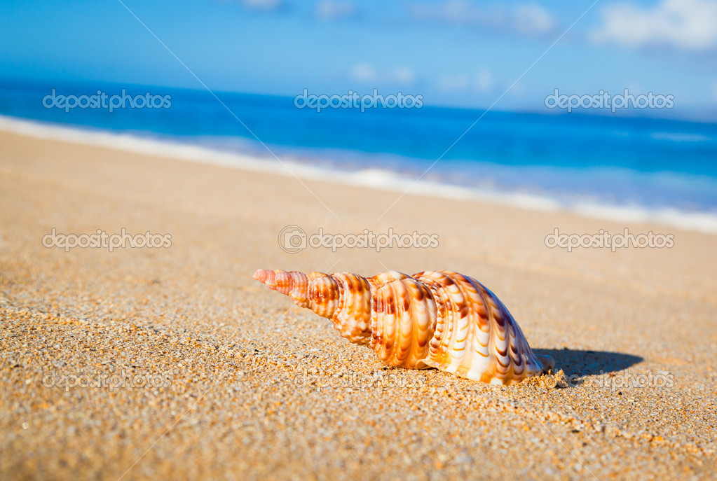 Shell on Exotic Beach  Stock Photo #8474006
