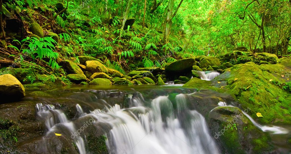 Beautiful Lush Waterfall — Stock Photo #8475183