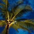 Tropical Night Sky, Palm Trees and Moon — Stock Photo