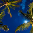 Tropical Night Sky, Palm Trees and Moon — Stock Photo #8487093