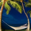 Stock Photo: Tropical Night, Palm Trees and Hammock