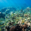 Tropical Reef in Hawaii Underwater - Stock Photo
