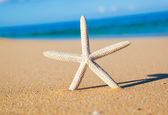 Starfish, Shell on the Beach — Stock Photo