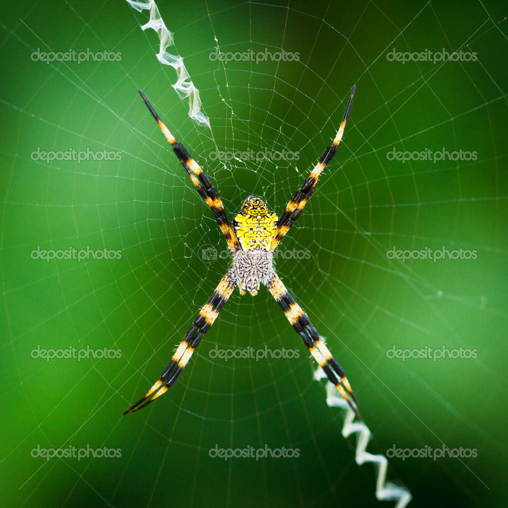 Black and Yellow Spider — Stock Photo #8486062