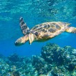 Green sea turtle swimming in ocean sea — Stock Photo #8544706