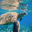 Green sea turtle swimming in ocean sea — Stock Photo