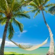 Tropical Palm Trees and Hammock - Stockfoto