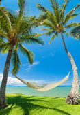 Tropical Palm Trees and Hammock — Stock Photo