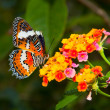 beautiful butterfly on colorful flower — Stock Photo