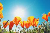 Beautiful Spring Flowers — Zdjęcie stockowe