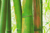 Abstract Zen Bamboo — Stock Photo