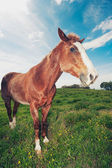 Horses in Field — Stock Photo