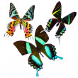 Tropical Butterflys - Stock fotografie
