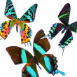 Tropical Butterflys - Foto de Stock