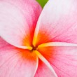Tropical flowers — Stock Photo #9838630