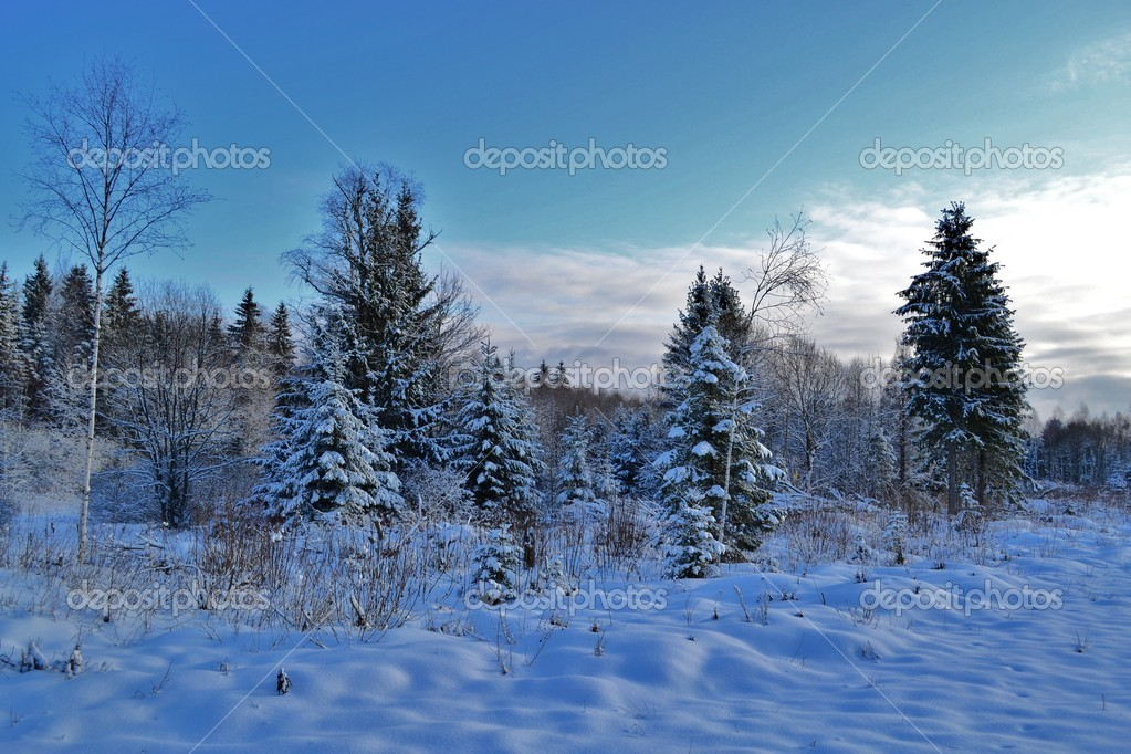 Thetrees jn the background blue sky — Stock Photo #8514384