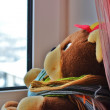 ストック写真: THE BEAR LOOKS THE WINDOW