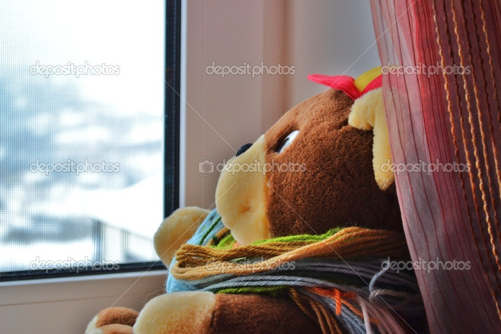THE BEAR LOOKS THE WINDOW — Stock Photo #8558783