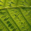 Group of green leaves of fern under the sun — Stock Photo