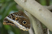 Tropical butterfly perched on a tree trunk — Stock Photo